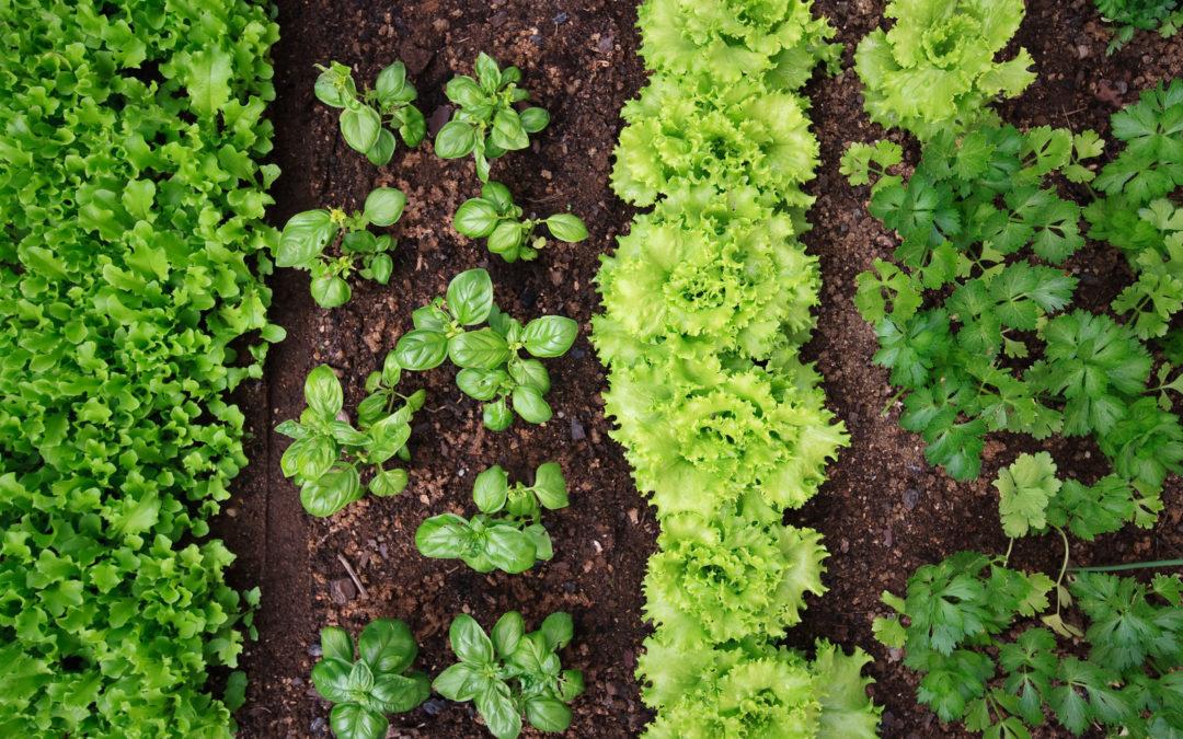 Ortaggi di stagione a Km 0: consigli per coltivare l'orto