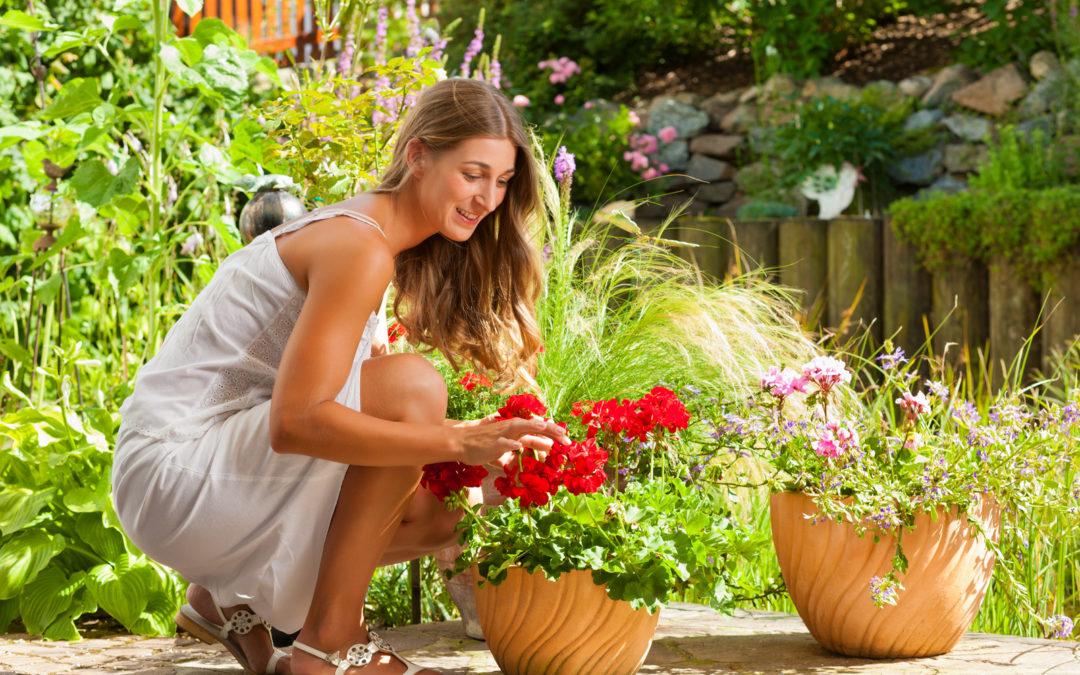 Allestimenti piante da interni
