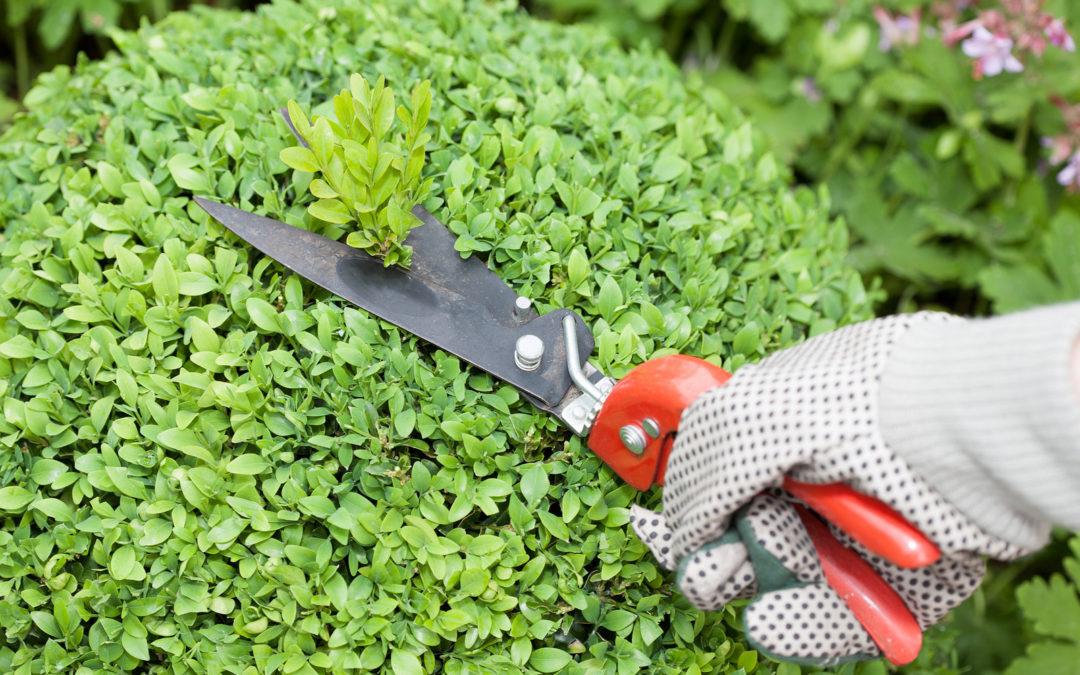 Guida utile per effettuare la periodica manutenzione dei giardini